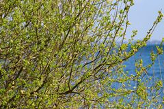 выходит новая весна Стоковая Фотография