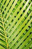 выходит пальма Стоковое Фото