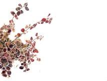 выходит пурпур Стоковые Изображения
