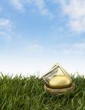 Выход на пенсию яйц из гнезда стоковое фото