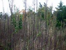 вычерченная иллюстрация руки травы поля Стоковое фото RF