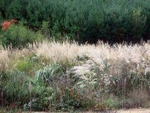вычерченная иллюстрация руки травы поля Стоковые Изображения RF