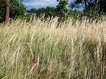 вычерченная иллюстрация руки травы поля Стоковые Изображения