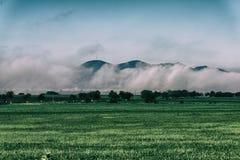 вычерченная иллюстрация руки травы поля Стоковое Фото