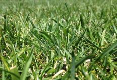 вычерченная иллюстрация руки травы поля Стоковое Изображение RF