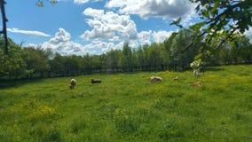вычерченная иллюстрация руки травы поля Стоковое Изображение