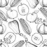 вычерченная картина руки безшовная Corns сбора осени, яблоки, насос Стоковое Изображение RF