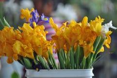 вычерченная радужка иллюстрации руки цветков Стоковые Изображения RF