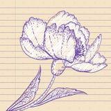 вычерченная рука цветка Стоковое Фото