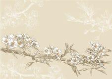 вычерченная рука цветка Стоковые Фотографии RF