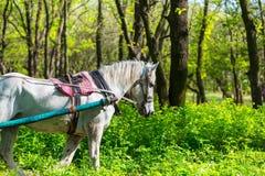 вычерченная фура лошади Стоковое Изображение RF