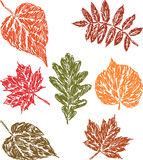 вычерченные листья руки