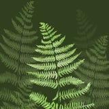 вычерченные листья руки папоротника Стоковые Фотографии RF
