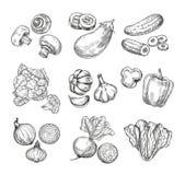 вычерченные овощи руки Цветная капуста сада, перец и баклажан, champignons Свежие продукты vegan Овощ эскиза иллюстрация вектора