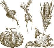 вычерченные овощи руки Стоковые Изображения RF