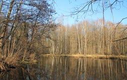 вычерченные древесины белизны вектора озера иллюстрации руки Стоковое Фото