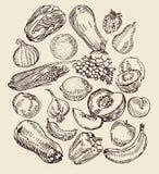 Вычерченные фрукты и овощи иллюстрация штока