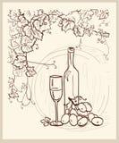 вычерченный виноградник руки Стоковое Изображение RF