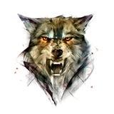 Вычерченный изолированный портрет цвета животного волка иллюстрация вектора