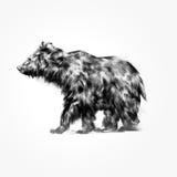 Вычерченный изолированный животный медведь иллюстрация штока