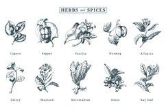 Вычерченный комплект вектора специй и трав Ботанические иллюстрации органического, заводы eco Использованный для стикера фермы, я Стоковые Фотографии RF