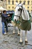 вычерченный таксомотор лошади Стоковая Фотография RF