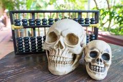 Вычисление черепа Стоковые Изображения RF