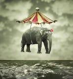 Вычурный слон Стоковое фото RF