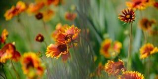 Вышивка полевых цветков Цвести цветки на ландшафте природы Полевые цветки на поле лета Цветки в цветении стоковое фото