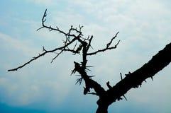 выщербленная ветвь Стоковая Фотография