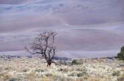 Выдвигаясь песчанные дюны Стоковые Изображения RF