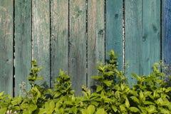 Выдержанная деревянная стена Стоковые Фото