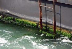 Выдержанные водоросли покрыли лестницы Стоковое Фото