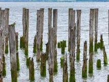 Выдержанные деревянные планки 1 дока Стоковое Изображение RF