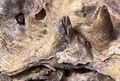 Выдержанные картины и текстура на пне дерева гнить Стоковые Фото