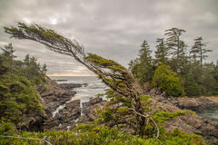 Выдержанный лес Стоковое фото RF