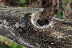 Выдержанный рельс загородки Стоковое Фото