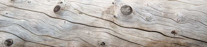 Выдержанный ствол дерева выдержанный и Стоковое Изображение