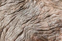 Выдержанный driftwood Стоковое Изображение RF