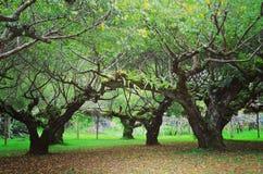 Вы можете увидеть много дерево в природе но имеете некоторое красивое дерева стоковое изображение