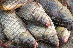 Вылов рыбы Стоковое Фото
