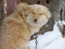 Вьюга и собака Стоковое Изображение RF