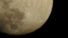 Вьюрок 4 луны сток-видео