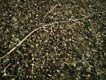 Вянуть листья и хворостины Стоковая Фотография