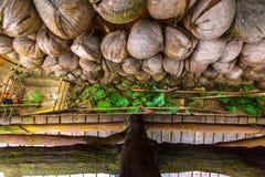 Вянуть кокосы на стене, взгляд сверху Sanya Li и вилла Miao Стоковые Изображения RF