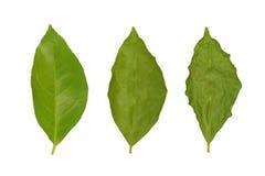 вянуть лимона листьев Стоковая Фотография