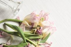 Вянуть розовые тюльпаны Стоковое Фото