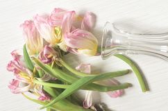 Вянуть розовые тюльпаны Стоковые Фото