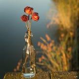 Вянуть розы в бутылке Стоковые Изображения