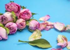Вянуть розы как символ прошлой влюбленности Стоковые Фото